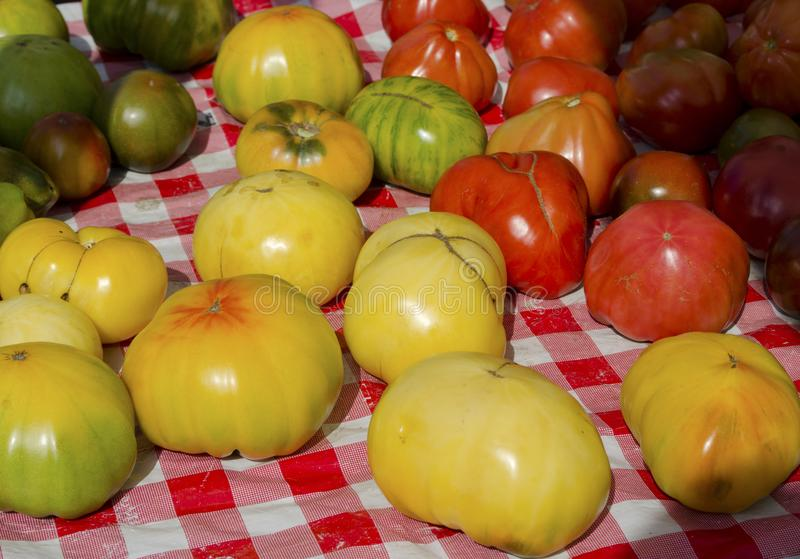 Heirloom Tomatoes. A variety of colors and shapes of heirloom tomatoes for sale at the outdoor farm market royalty free stock photo