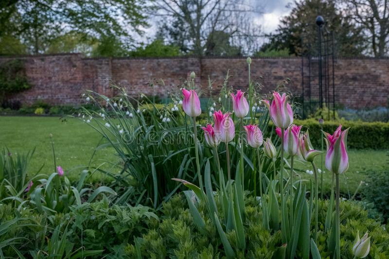 A variety of colourful wild flowers on display in Eastcote House Gardens, historic walled garden maintained by volunteers, UK royalty free stock photography