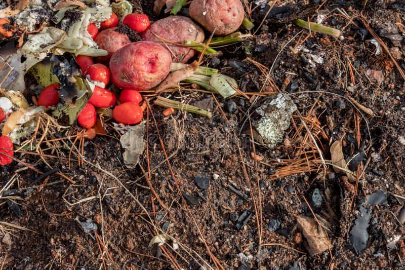 A variety of decomposing organic matter, food scraps mixed with dirt leaves and pine needles. Horizontal aspect royalty free stock image