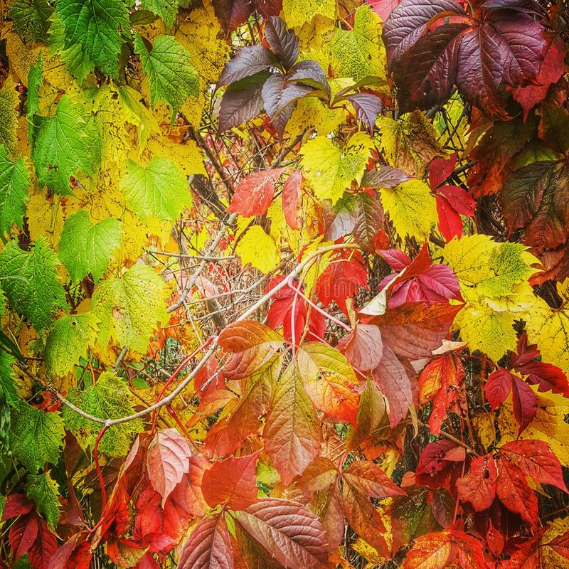 Variety of fall colors stock images
