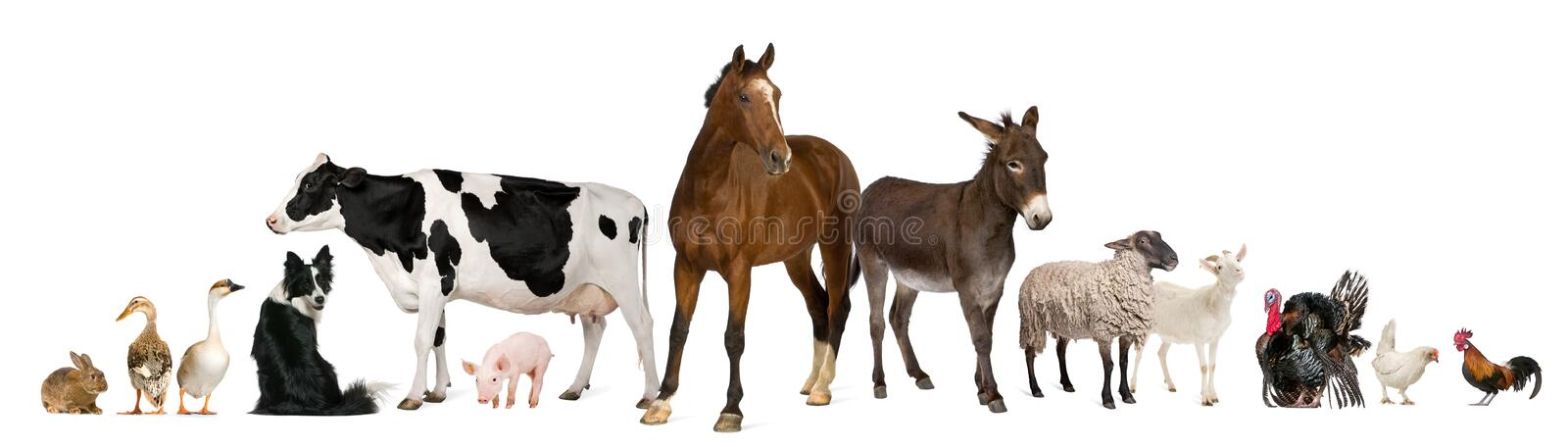 Variety of farm animals. In front of white background
