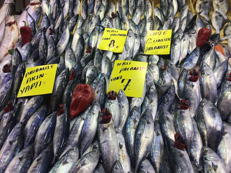 Sea food market. Variety of fishes and from left right `bonito flocked`, `local bonito` and `daily fresh bonito` written on tags at fish store royalty free stock image