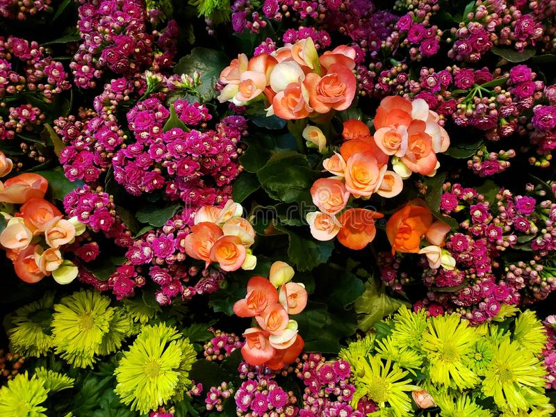 Variety of flower in different colors decorating a garden, background and texture. Nature and botany, flora and natural life, flower petals with intense colors royalty free stock photo