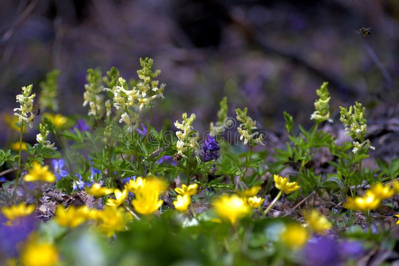 A variety of flowers and summer colors royalty free stock photos