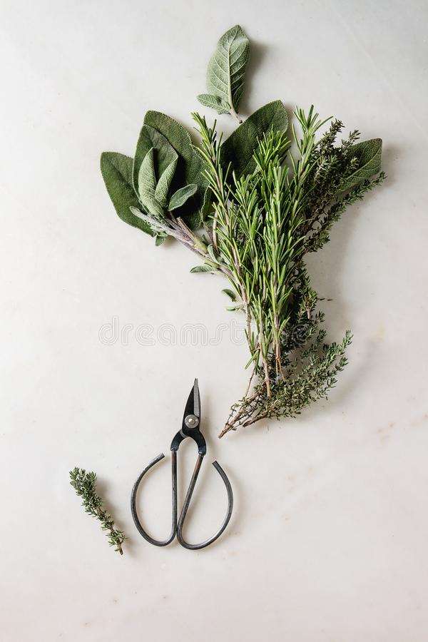 Kitchen herbs and carrots royalty free stock images