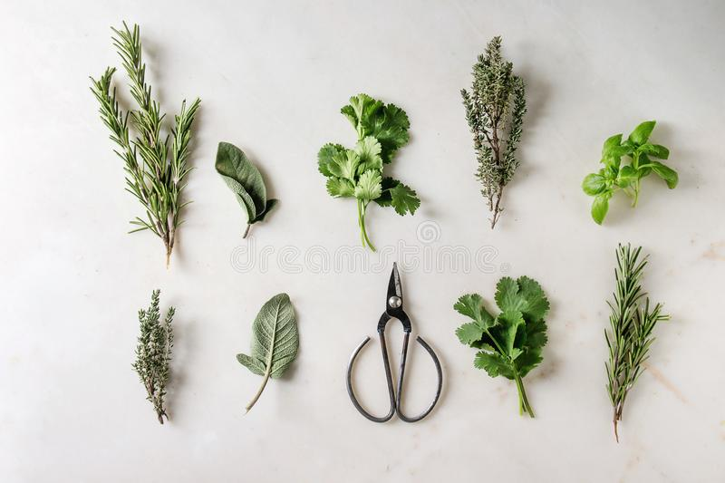 Kitchen herbs and carrots stock images