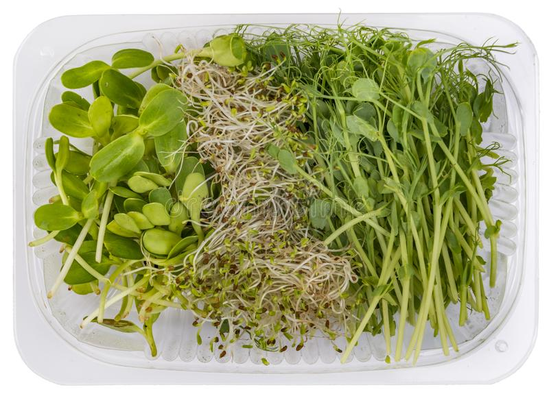 Variety of fresh microgreens shoots on white background royalty free stock photo
