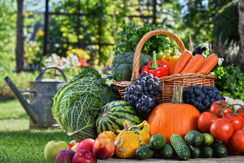 Variety of fresh organic vegetables and fruits in the garden royalty free stock images
