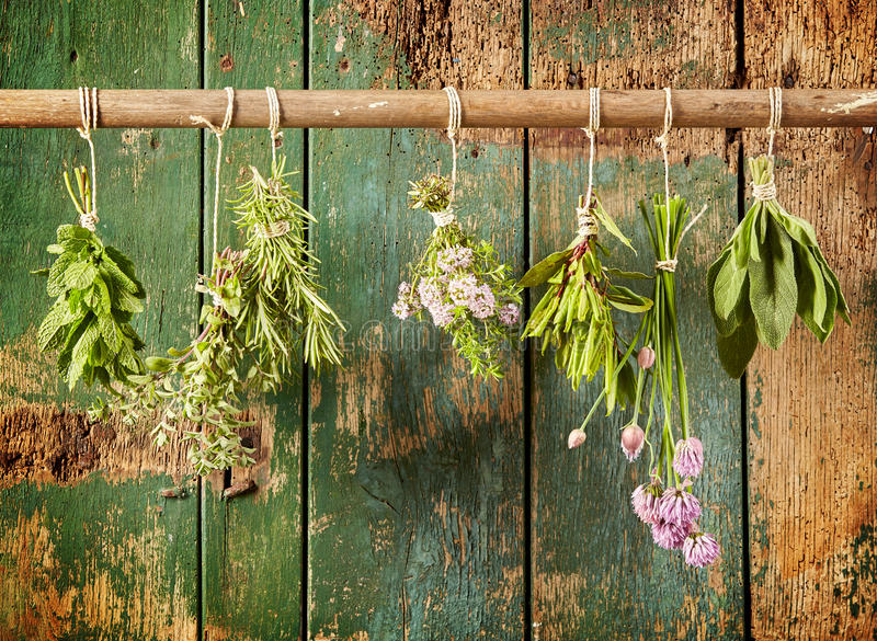 A variety of freshly picked culinary herbs stock images