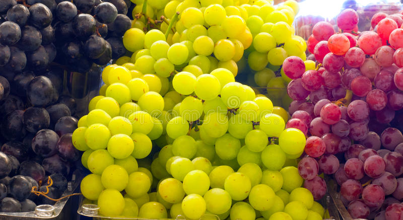 Download Variety of grapes stock image. Image of summer, colors - 26005775