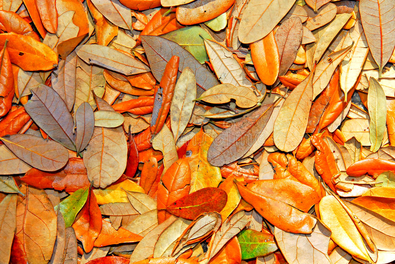 Variety of oak leaves royalty free stock photography