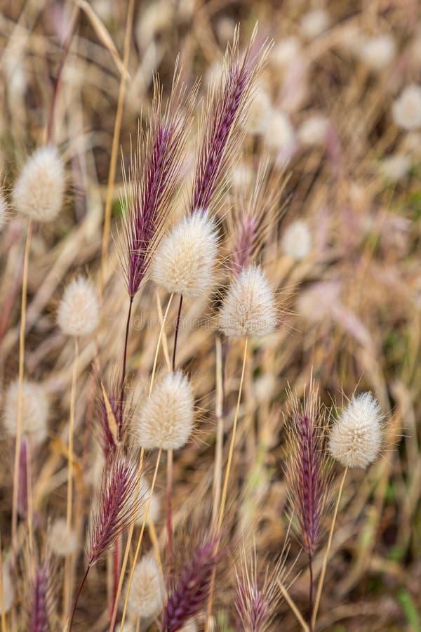 A Variety of Ornamental Grasses stock photos