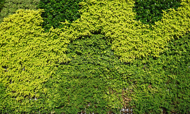 Variety of plants in vertical garden texture royalty free stock image