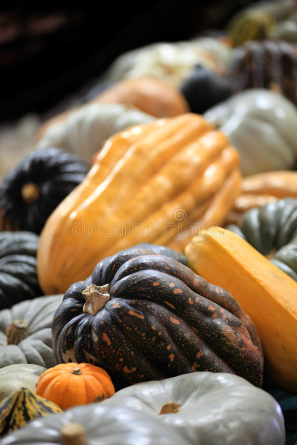 Variety Of Pumpkins Stock Photo