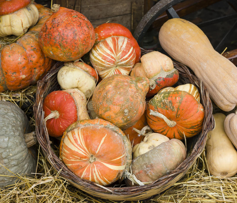 Variety Of Pumpkins Royalty Free Stock Images