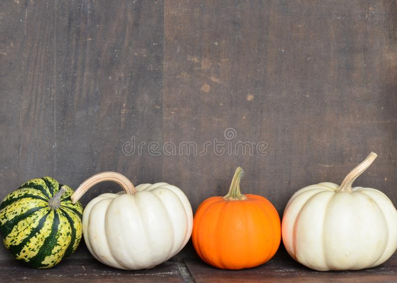 Variety of pumpkins, gourds and squash on wooden background royalty free stock photos