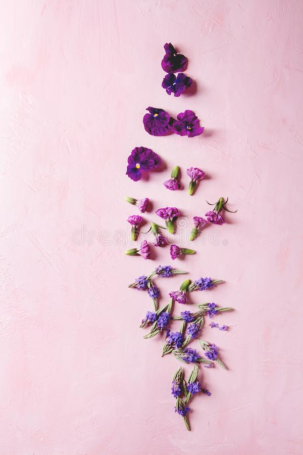 Purple edible flowers royalty free stock photos
