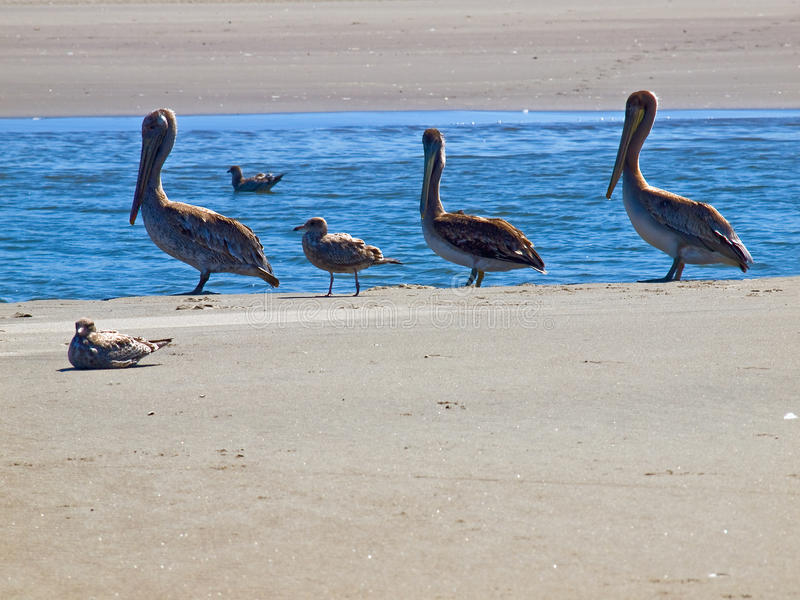Download A Variety Of Seabirds At The Seashore Stock Photo - Image: 27881884
