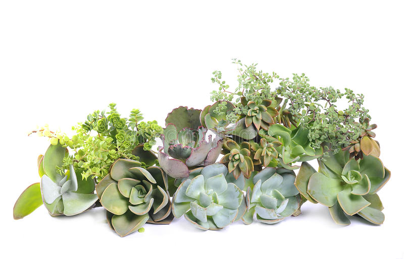 Variety of succulents stock images