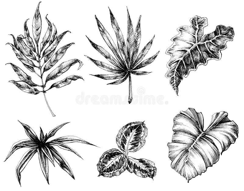 Vario disegno della mano delle foglie illustrazione di stock