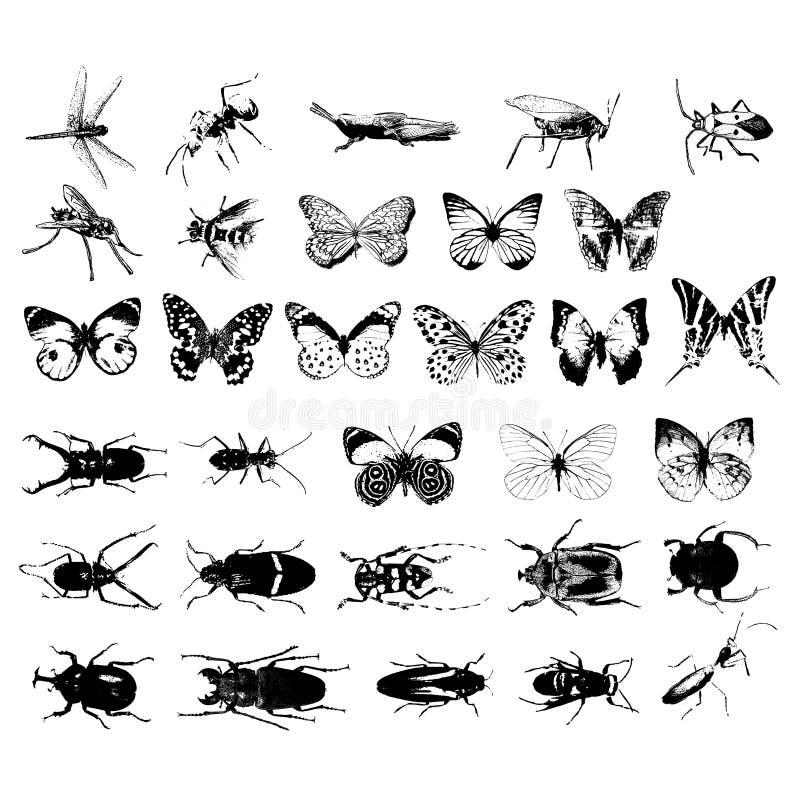 Vario genere di insetti illustrazione di stock