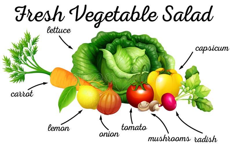 Vario genere di verdure per insalata illustrazione vettoriale
