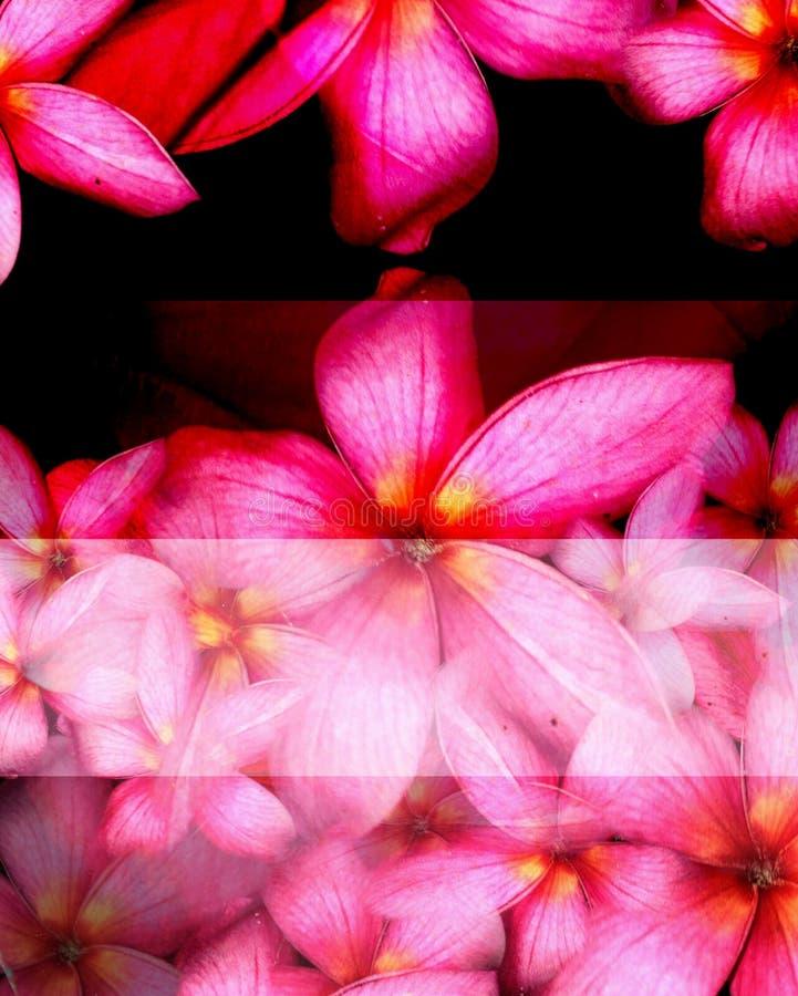 Variopinto dei fiori sulla terra immagine stock libera da diritti