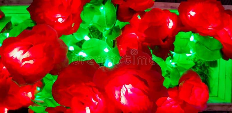Variopinto di bella luce del fiore in rea e nel verde fotografia stock libera da diritti