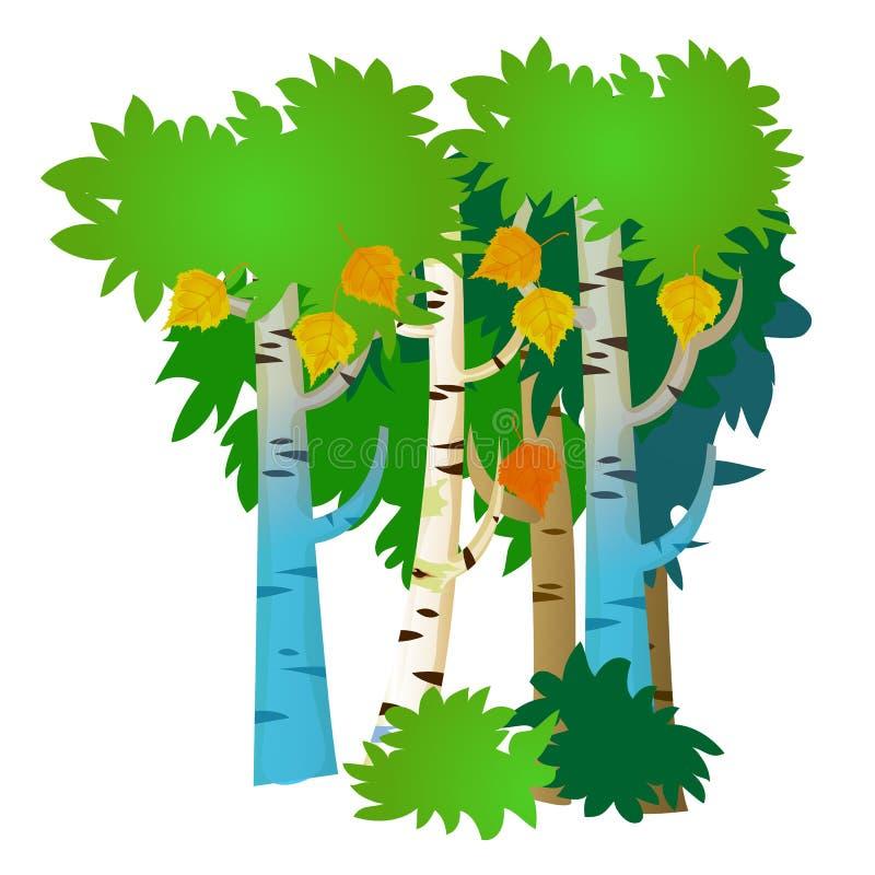Varios árboles de abedul con las hojas del verano y de otoño aisladas en el fondo blanco Ejemplo del primer de la historieta del  stock de ilustración