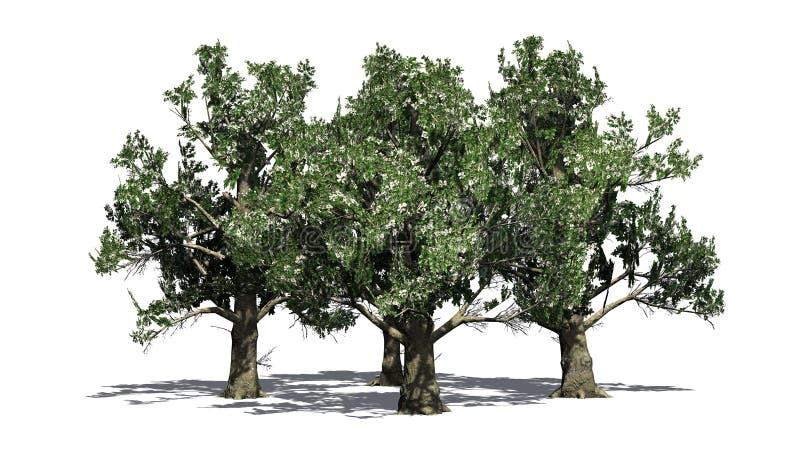 Varios árboles de la magnolia meridional con los flores ilustración del vector