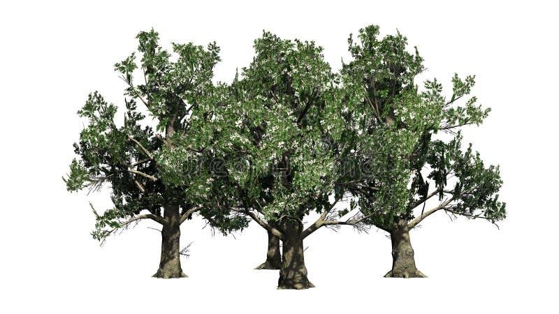 Varios árboles de la magnolia meridional con los flores stock de ilustración
