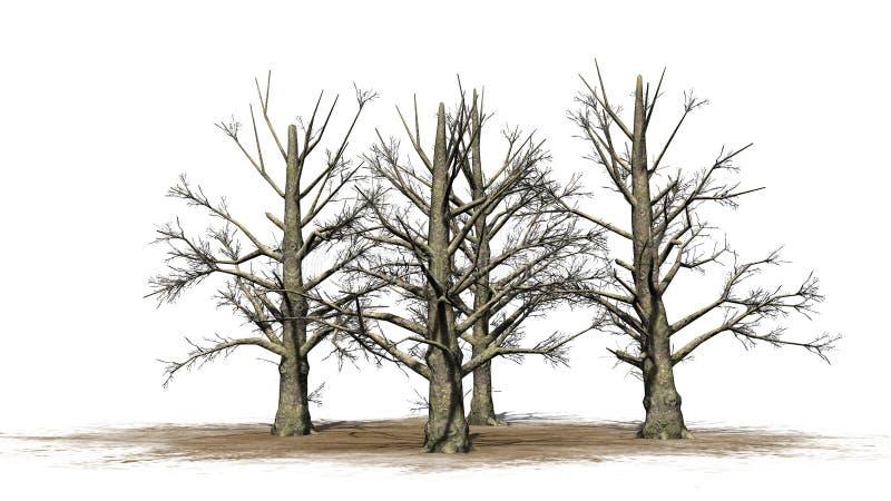 Varios árboles de la magnolia meridional en el invierno libre illustration