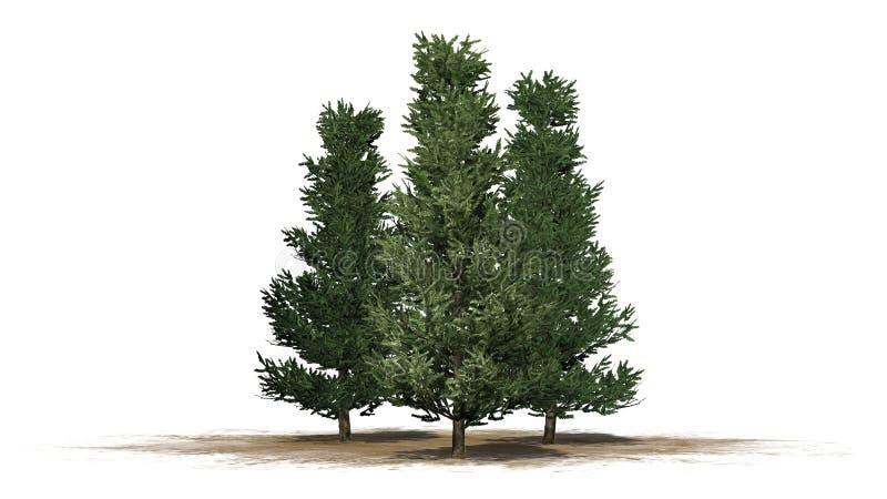 Varios diversos árboles de Fraser Fir stock de ilustración