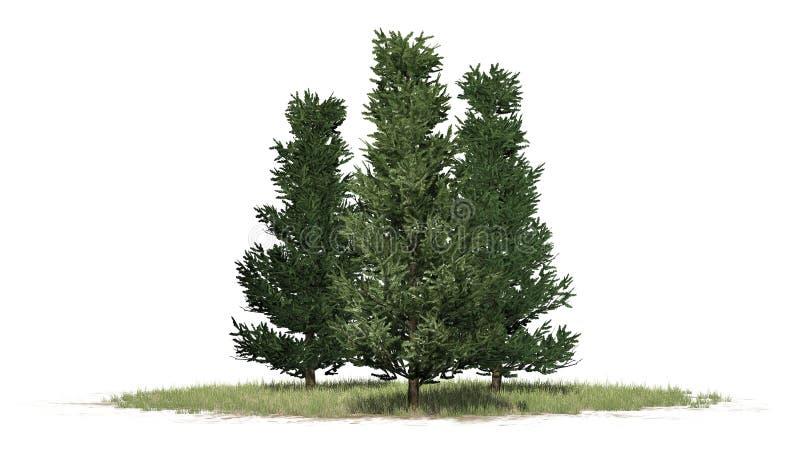 Varios diversos árboles de Fraser Fir ilustración del vector