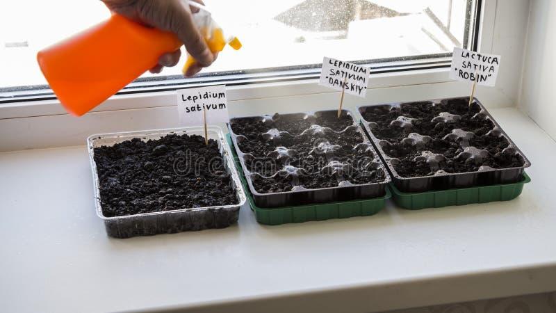 Varios envases de plástico con el suelo del jardín Almácigo-imagen plantada fotos de archivo libres de regalías