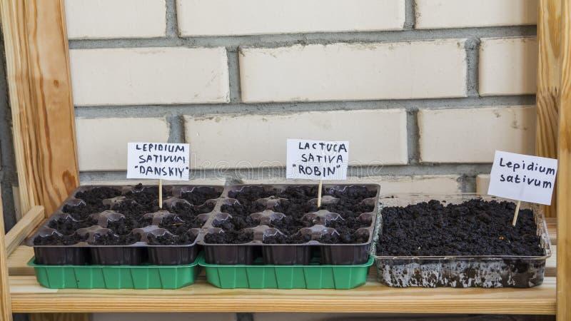 Varios envases de plástico con el suelo del jardín Almácigo-imagen plantada fotos de archivo