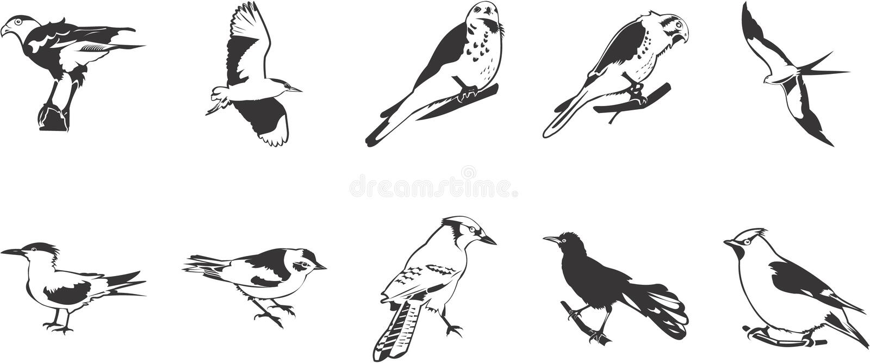Varios pájaros ilustración del vector