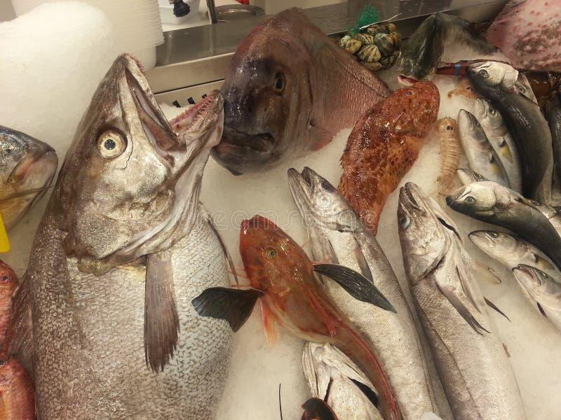 Varios pescados fotografía de archivo libre de regalías