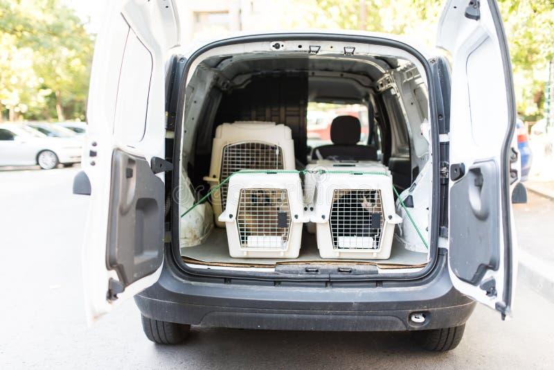 Varios portadores de líneas aéreas de los animales domésticos en un coche, alistan para el tranportation fotos de archivo
