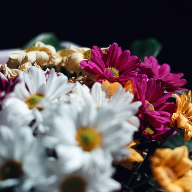 Various сhrysanthemums flowers on black background stock photography