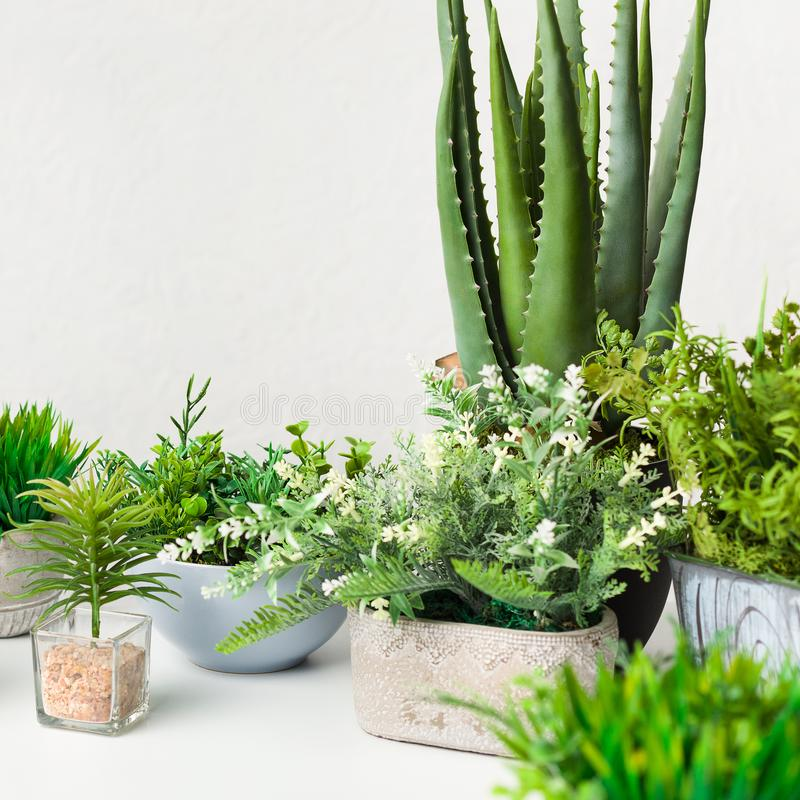 Various artificial house plants in different pots over white wall. Crop royalty free stock photo