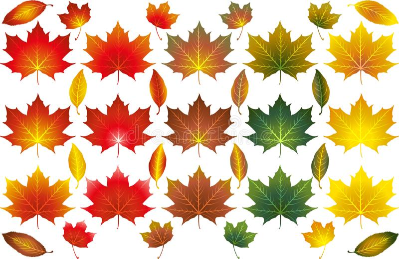 Various Autumn Leaves Illustrated Vectors. Various isolated illustrated vectors of different types and colours of Autumn leaves vector illustration