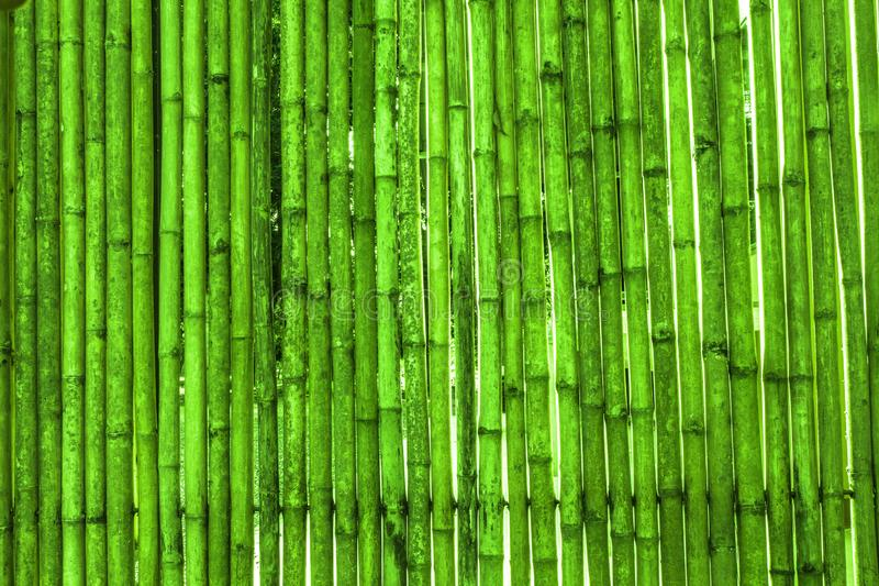 Various bamboo trees with naturalcolors. Various bamboo trees with natural colors stock image