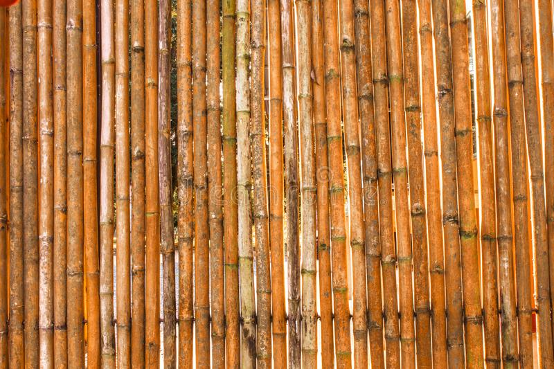 Various bamboo trees with naturalcolors. Various bamboo trees with natural colors stock photography