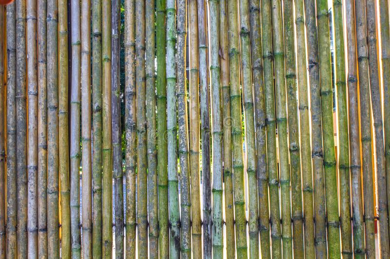 Various bamboo trees with naturalcolors. Various bamboo trees with natural colors royalty free stock images
