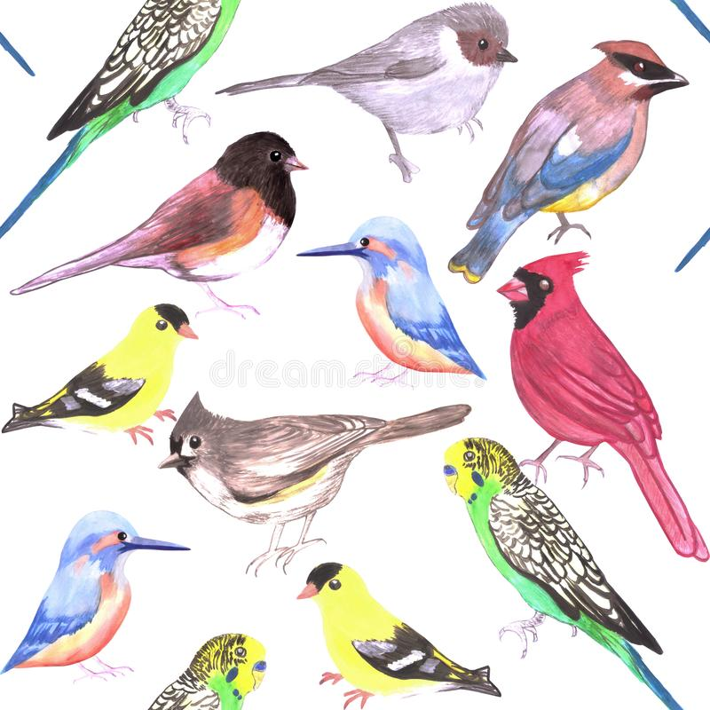 Various birds seamless watercolor background- budgie cardinal goldfinch titmouse kingfisher cedar waxwing juncos.  royalty free illustration