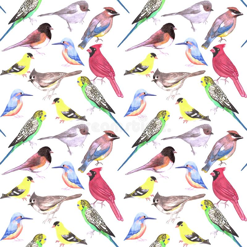 Various birds seamless watercolor background- budgie cardinal goldfinch titmouse kingfisher cedar waxwing juncos on white.  stock illustration