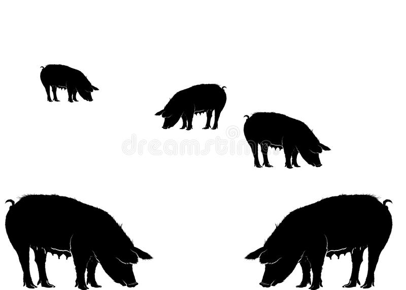 Various pigs eating vector. Various black five pigs eating vector format aviable AI animal farm royalty free illustration