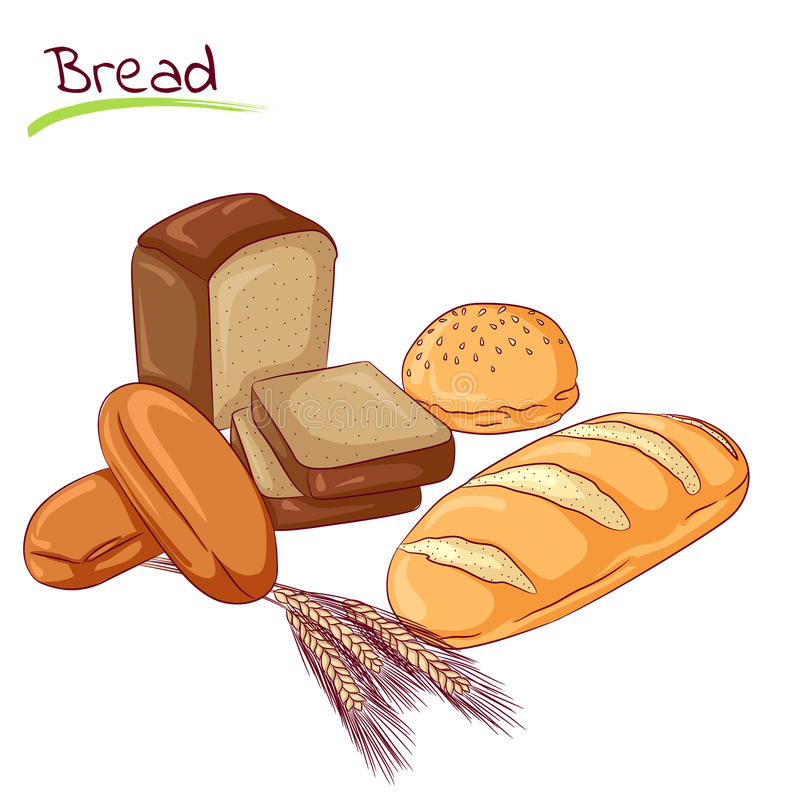 Various bread loafs. Vector illustration of various breads isolated on white background. Food Icon. Design for cookbook, restaurant business. Series of food vector illustration