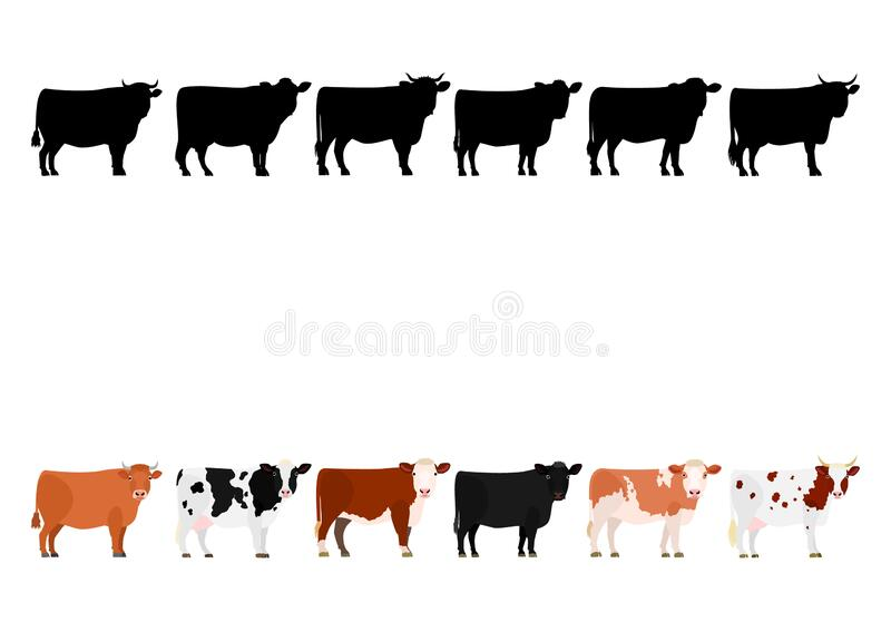 Various cows in a row. Various breeds of cow standing in a row, set of cows color image and silhouette image vector illustration
